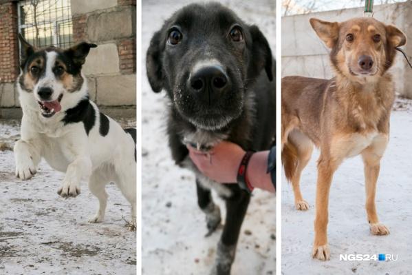 Все собаки очень разные, так что каждый человек сможет найти питомца по душе