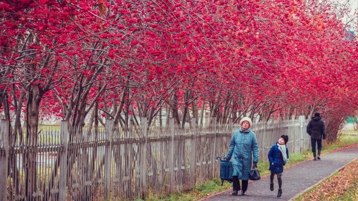 Синоптики Кузбасса предупредили о первых заморозках в ближайшие дни