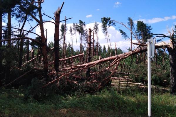 Ураган повалил десятки деревьев