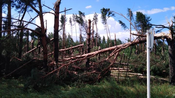 Помидоры улетели вместе с теплицей: на Ярославскую область обрушился ураган. Фото и видео