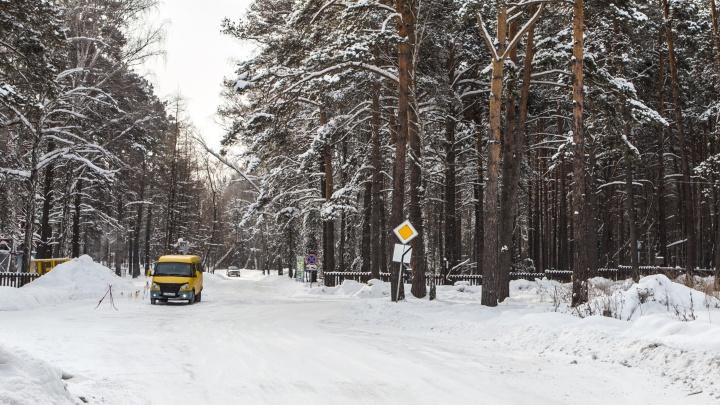 Чтобы было, как в Лондоне: власти решили равномерно распределить по Новосибирску зелёные зоны