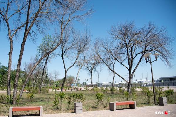 При посадке деревьев нельзя игнорировать особенности участка