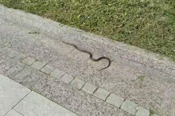 Змею обнаружили на нижнем ярусе набережной