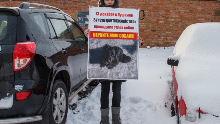 Первому заместителю мэра Омска внесли представление из-за пропавшей собаки