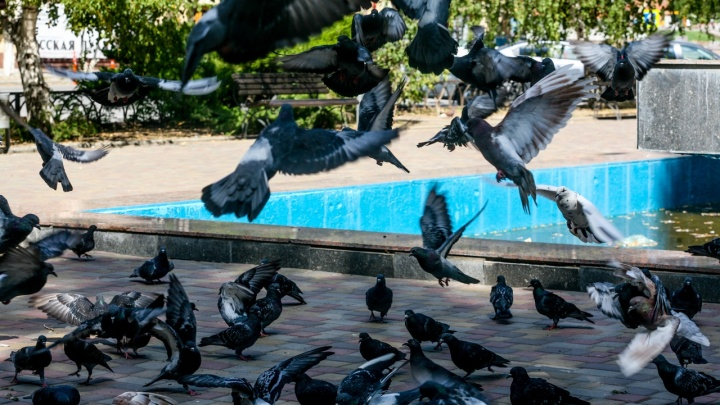 Птичий вихрь над влюбленными попал в объектив волгоградского фотографа