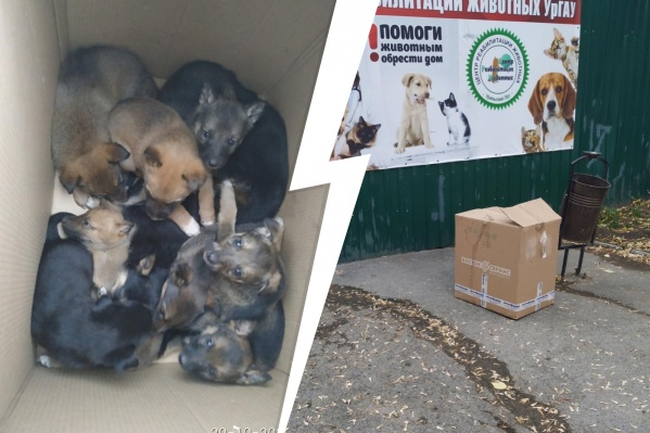 Щенков подкинули к воротам Центра реабилитации животных