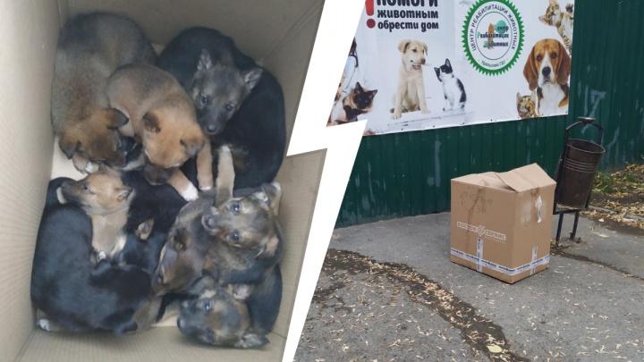 В Екатеринбурге ищут хозяев щенкам, которых выбросили в коробке на обочине трассы