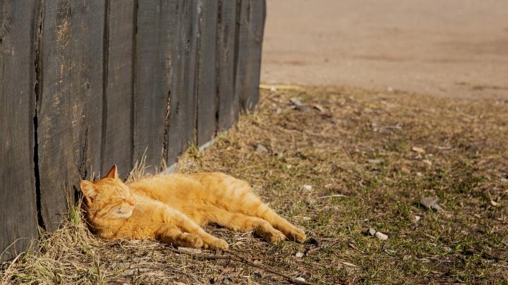 По городу — в пижамке: гуляем по весеннему Ярославлю не выходя из дома