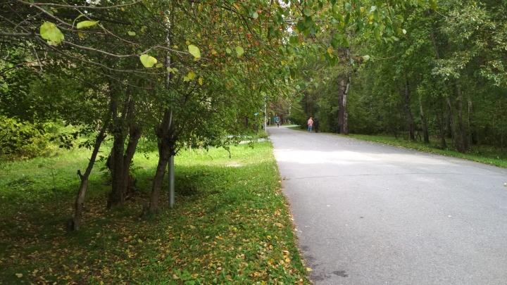 Самокатам запретят ездить по пешеходным дорожкам Заельцовского парка — что ещё изменит реконструкция за 175 миллионов