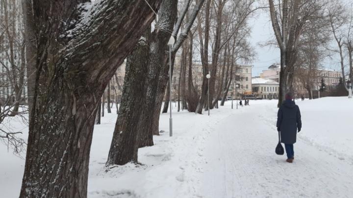 В Архангельске на один вечер откроют «Зимний уличный кинотеатр»
