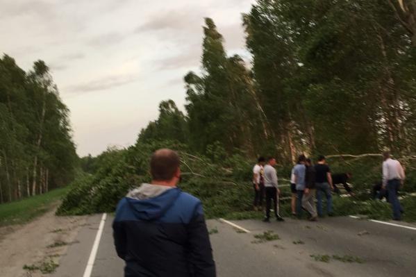 На дороге Тюмень — Нижняя Тавда ветром валило деревья