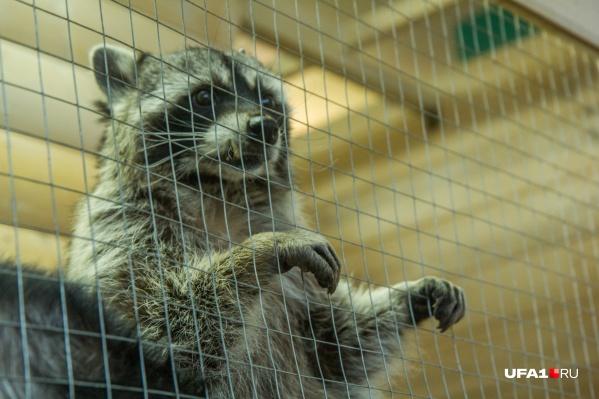 По мнению чиновника, в зоопарке животные будут жить в комфорте
