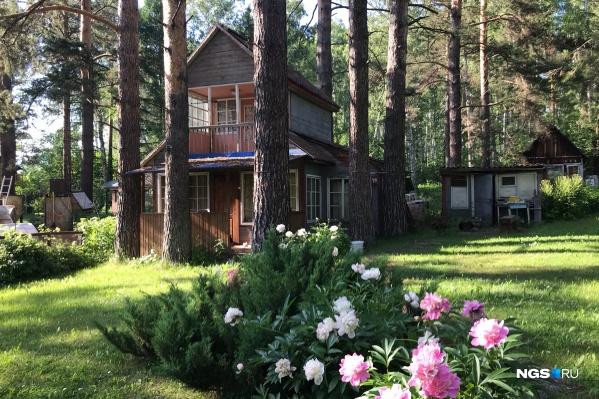 Эта дача в СНТ «Геодезист» кажется идеальной — в лесу, с пионами и без грядок