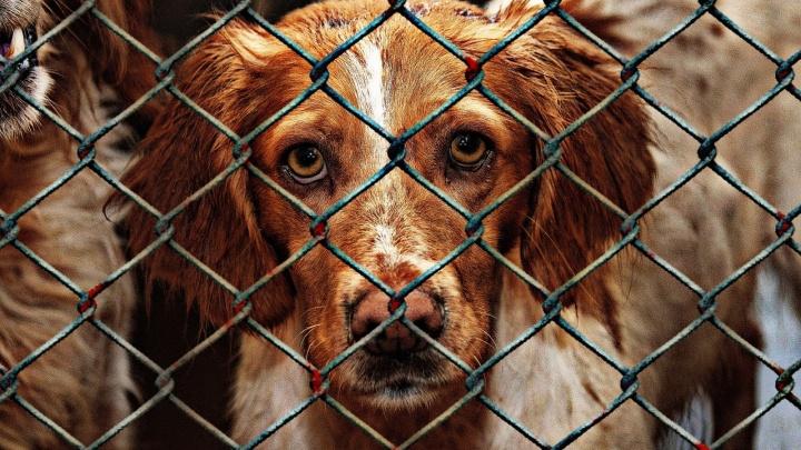 Жители Перми смогут бесплатно стерилизовать щенков, взятых из муниципального приюта