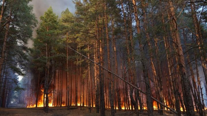 В Тарасовском районе потушили пожар, полыхавший четыре дня