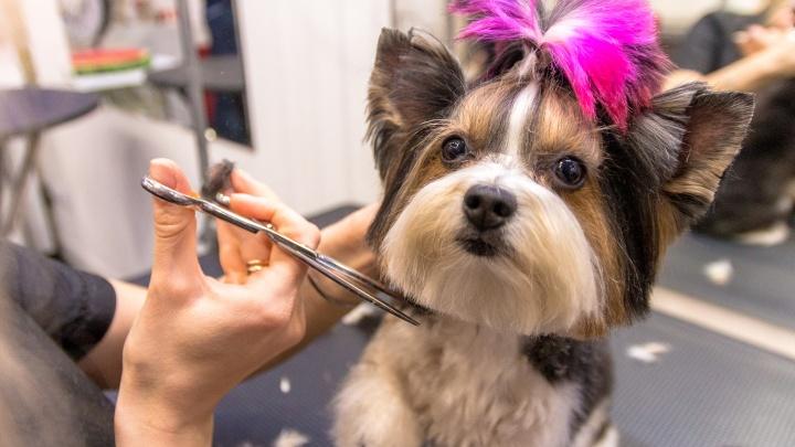 Как построить бизнес на стрижке собак: история салона «Бомондгрум» в Самаре
