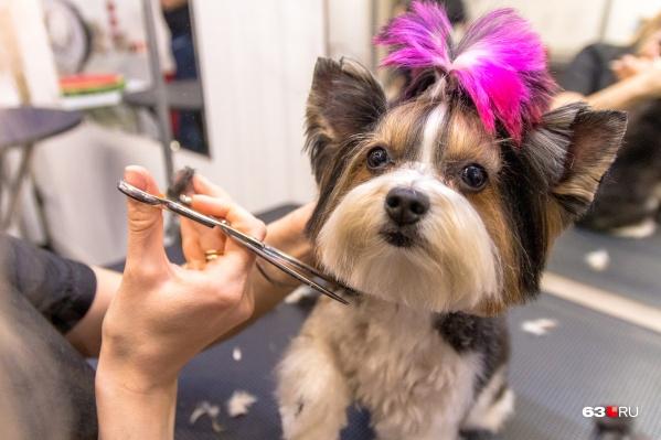 Делать собачек еще более мимишными — и приятно, и прибыльно