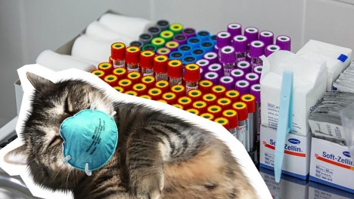 Тюменскую кошку с COVID-19 изолировали по месту постоянного проживания