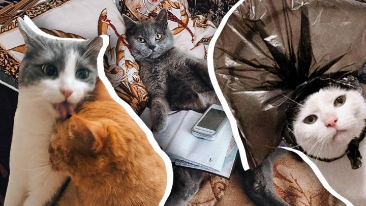 «Ты все еще не на работе?»: самарцы показали недовольных самоизоляцией котов