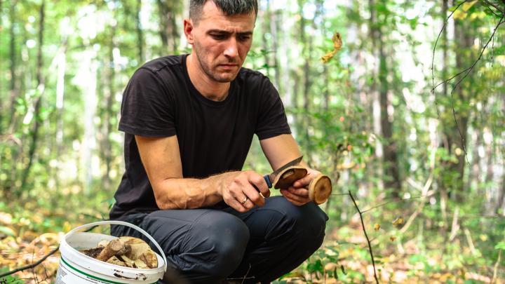 Куда пойти за подберезовиками, а где найти опята: карта грибных мест Самарской области
