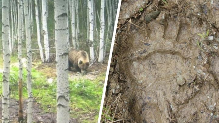 Ходят по садам и просекам: карта мест в окрестностях Екатеринбурга, где встречали медведей
