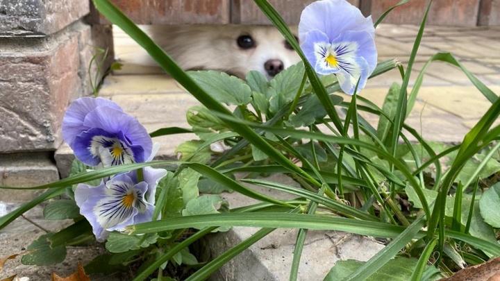 В Новосибирске внезапно распустились цветы — 8 фото, которые заставят вас тосковать по весне