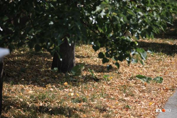 Под деревьями — куча опавшей листвы, будто на дворе уже октябрь