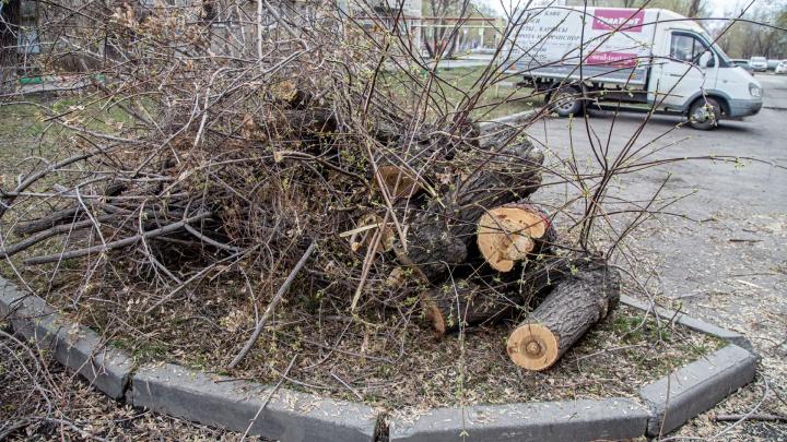 Вырубку деревьев и кустов в Ленинском районе не согласовали с администрацией Челябинска