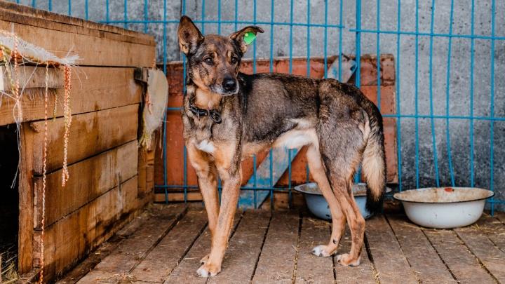 В Перми городские власти будут отдавать бродячих собак в частные приюты