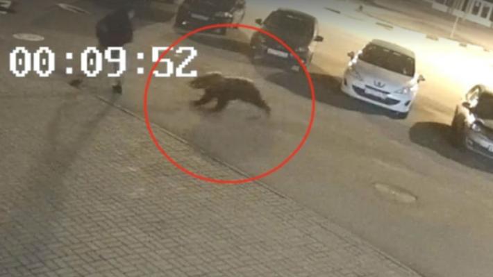 В Ярославле застрелили напавшего на человека медведя — а надо ли было? Мнения специалистов