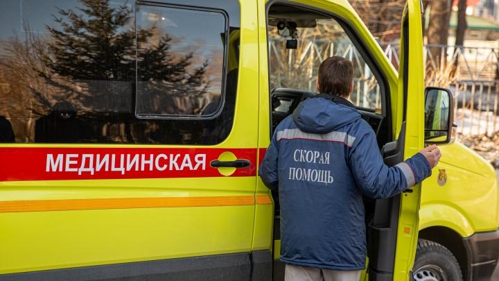 В Кузбассе ядовитая змея укусила 4-летнего ребёнка