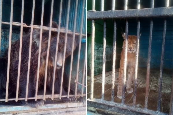 Пользователи соцсетей опасаются, что животные страдают в условиях передвижного зоопарка