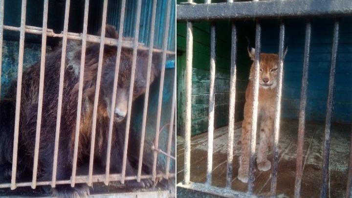 Под Тюменью распродают животных передвижного зоопарка. Выяснили, зачем их хозяин пошел на такой шаг