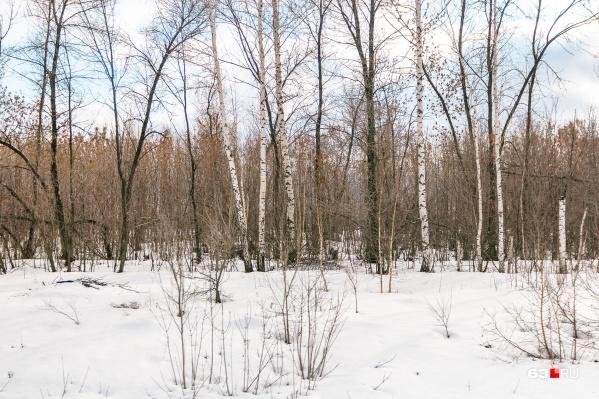 Лес стал ловушкой для мужчины с психическим расстройством