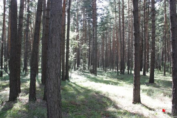 Установившаяся в регионе погода ухудшает лесопожарную обстановку