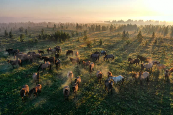 Красоту диких башкирских лошадей оценили на международном уровне