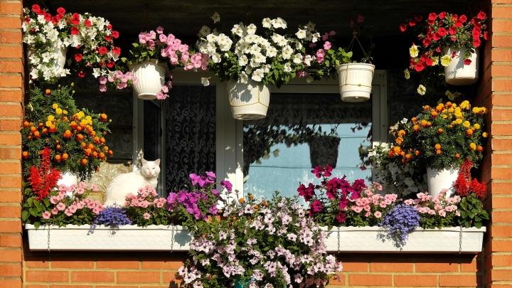 Да тут жить можно: смотрите, какую красоту сделали на балконе ваши соседи