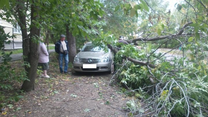 Десятки упавших деревьев, разбитые авто и летающие заборы: последствия урагана в Екатеринбурге