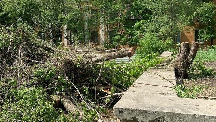 Мэр Челябинска потребовала отменить строительство аптеки на ЧМЗ, из-за которой вырубили деревья