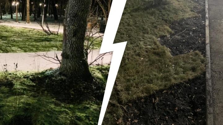 Рулонный газон утащили, белок отравили, кусты вырвали: екатеринбуржцы за неделю разнесли Зеленую Рощу