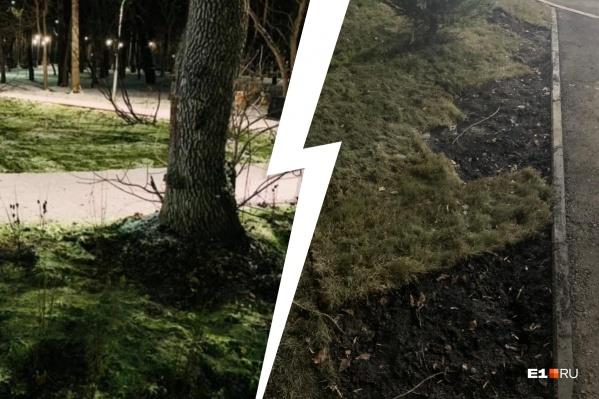 Рулонный газон просто отрезают и уносят в пакетах