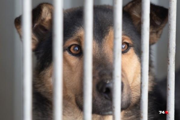 История с собаками тянется уже четвертый месяц