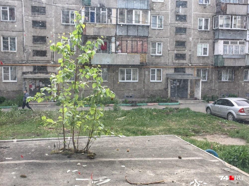 Сохранившуюся во дворе зелень можно пересчитать по пальцам, среди них — березы на козырьках подъездов