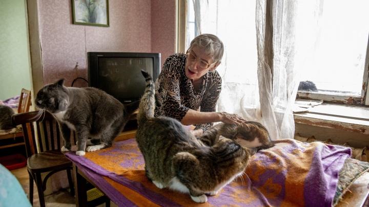 «Они проедают почти всю пенсию»: история женщины, приютившей дома 25 кошек. Видео