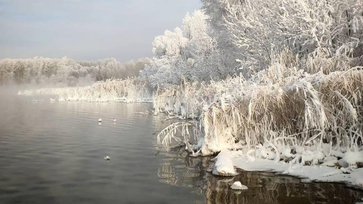 «Деревья в инее, а с воды парит туман»: любуемся озером Тёплое в мороз