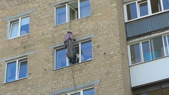 Пришлось спускаться по страховочным тросам: на Вторчермете спасли котика, застрявшего в окне шестого этажа