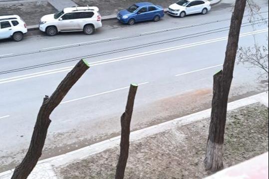 «В городе начался геноцид деревьев?»: волгоградцы вышли на защиту обрезаемых «под пень» акаций