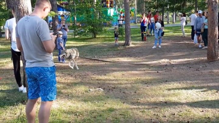 Глава Следственного комитета России потребовал разобраться со скандальным зверинцем, гуляющим в парке Челябинска