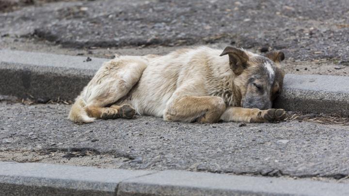 В Волгограде распилили павильон ради спасения собаки