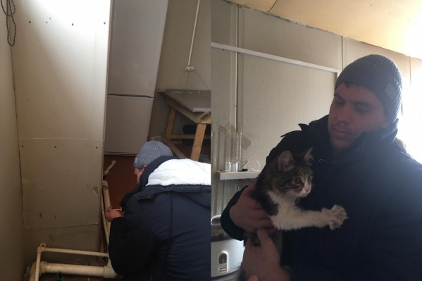 Ради спасения кошечки рабочие разобрали обшивку стен